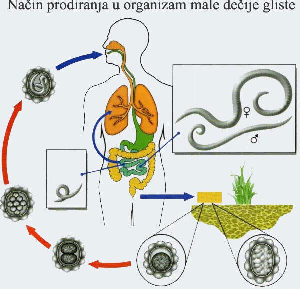 Paraziti kod djece lijecenje